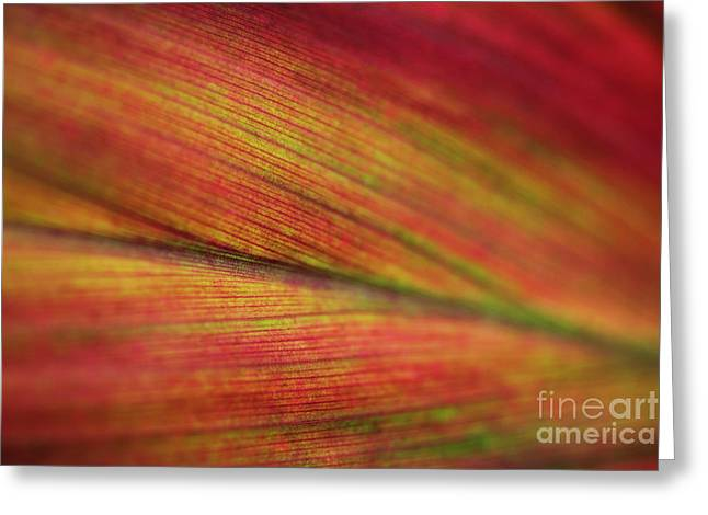 Greeting Card featuring the photograph Variegated Ti Leaf by Charmian Vistaunet