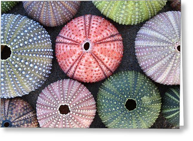 Variety Of Colorful Sea Urchins On Wet Greeting Card