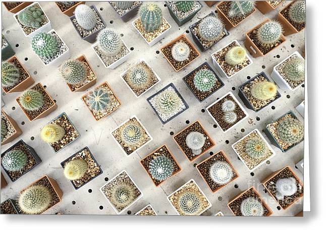 Variety Of Small Beautiful Cactus In Greeting Card