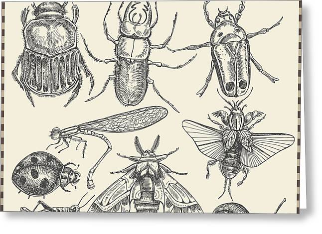 Vector Set Insects In Vintage Style Greeting Card