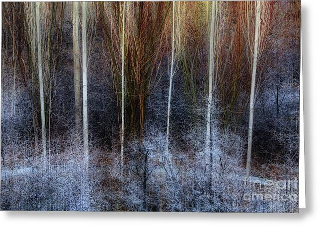 Veins Of Forest Greeting Card