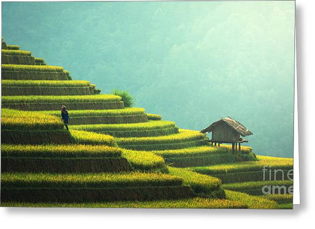 Vietnam Rice Fields On Terraced Of Mu Greeting Card