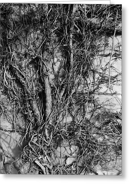 Greeting Card featuring the photograph Vine Highway by Jeni Gray