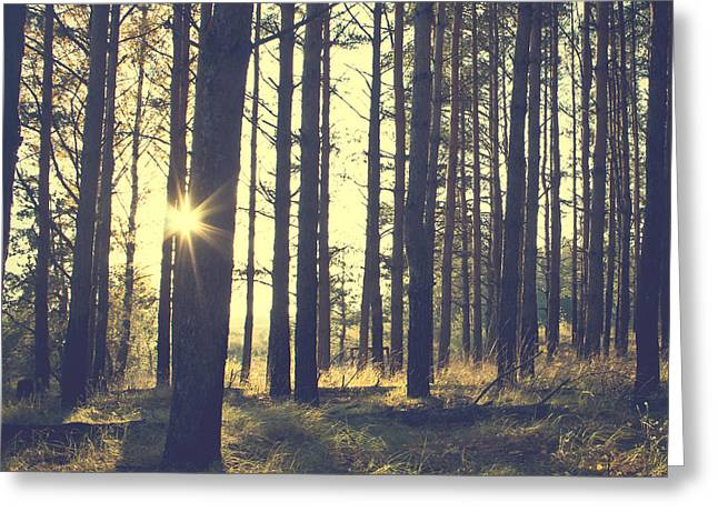 Vintage Forest Background Greeting Card