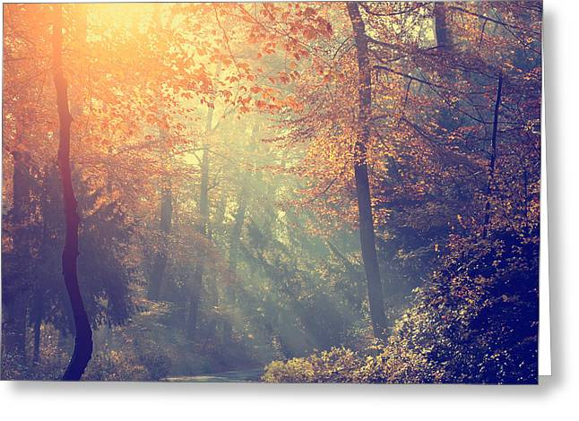Vintage Photo Of Autumn Forest Greeting Card by Dark Moon Pictures