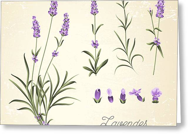Vintage Set Of Lavender Flowers Greeting Card