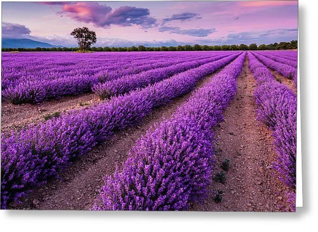 Violet Dreams Greeting Card