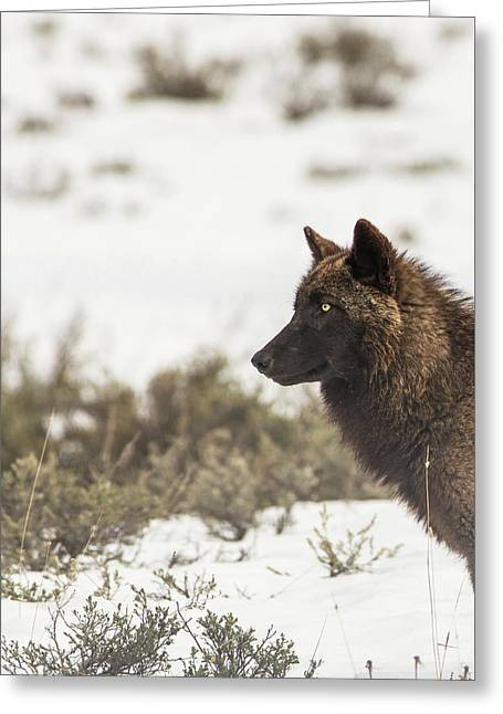 Greeting Card featuring the photograph W11 by Joshua Able's Wildlife