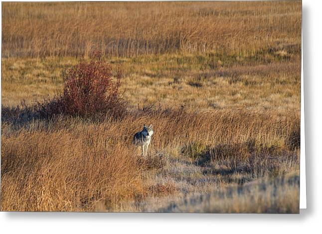 Greeting Card featuring the photograph W2 by Joshua Able's Wildlife