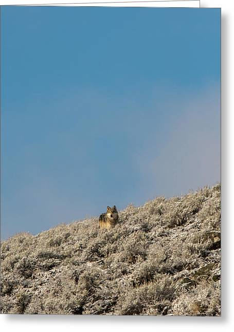 Greeting Card featuring the photograph W24 by Joshua Able's Wildlife