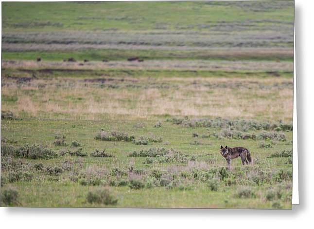 Greeting Card featuring the photograph W26 by Joshua Able's Wildlife