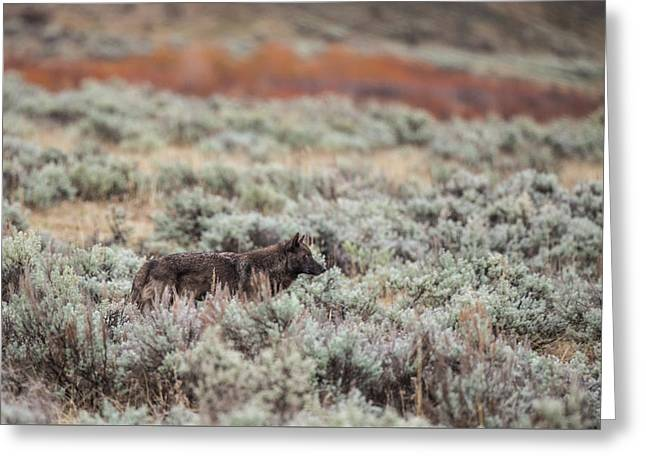 Greeting Card featuring the photograph W30 by Joshua Able's Wildlife