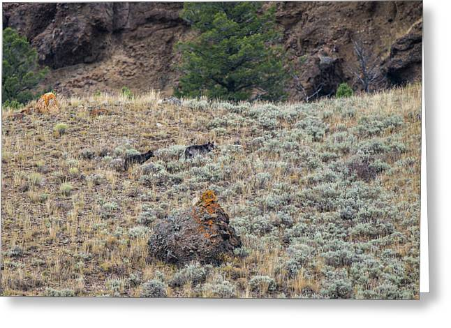 Greeting Card featuring the photograph W32 by Joshua Able's Wildlife