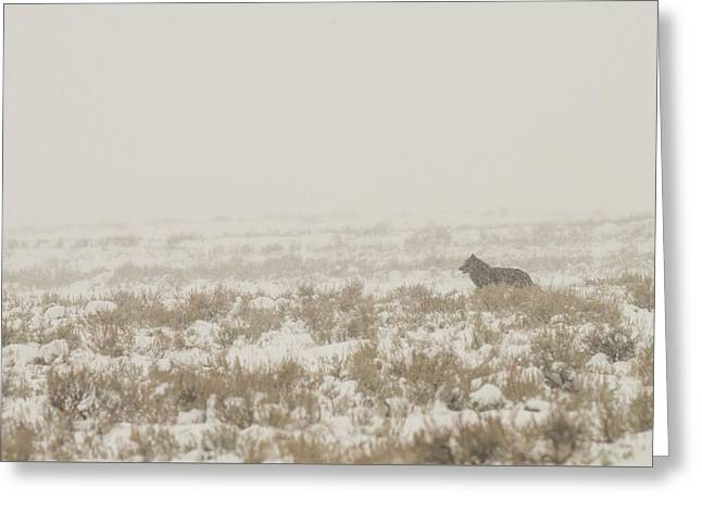 Greeting Card featuring the photograph W34 by Joshua Able's Wildlife