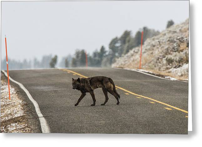 Greeting Card featuring the photograph W55 by Joshua Able's Wildlife