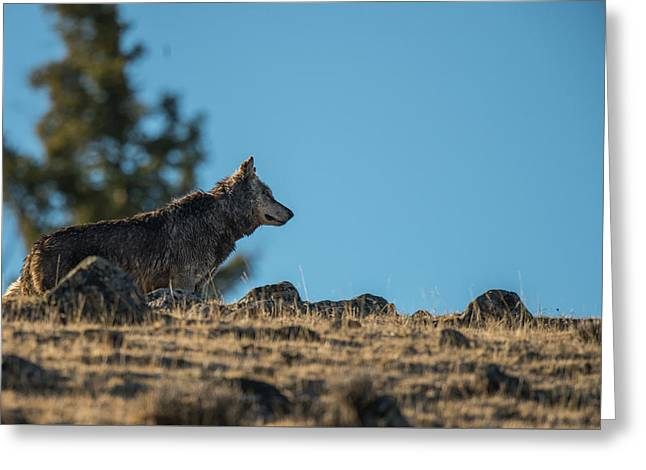 Greeting Card featuring the photograph W61 by Joshua Able's Wildlife