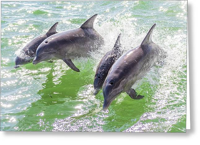 Wake Surfing Dolphin Family Greeting Card