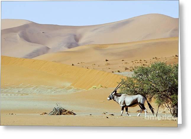 Wandering Dune Of Sossuvlei In Namibia Greeting Card