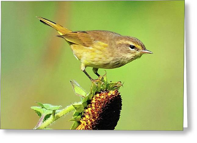 Greeting Card featuring the photograph Warbler by Debbie Stahre