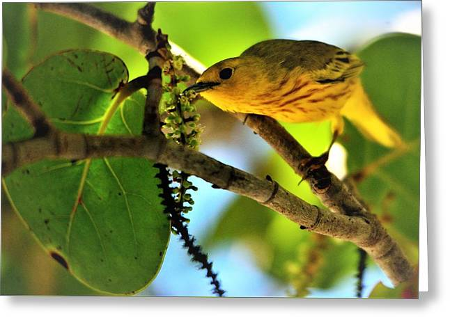 Warbler's Delight Greeting Card