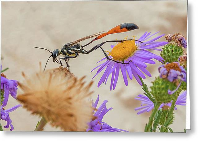 Wasp At White Sands Greeting Card
