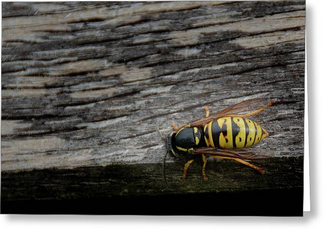 Wasp On Wood Greeting Card