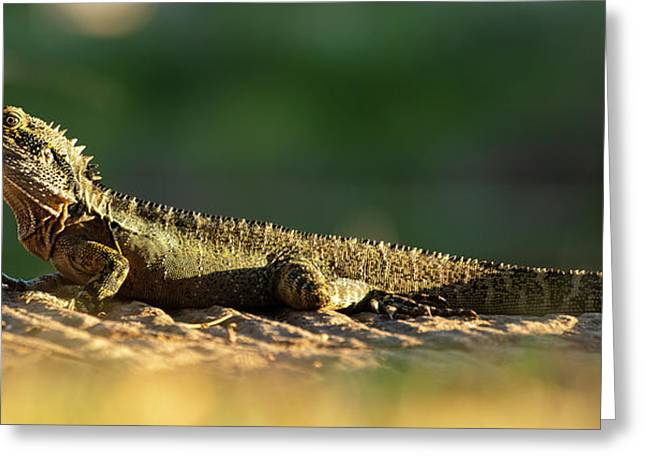 Greeting Card featuring the photograph Water Dragon Lizard Outdoors by Rob D Imagery
