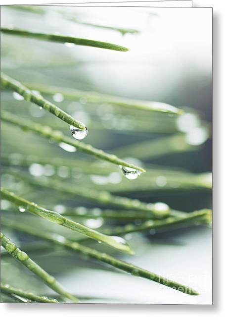 Greeting Card featuring the photograph Water Droplets On Fir Needles by Charmian Vistaunet