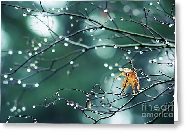 Greeting Card featuring the photograph Water Droplets On Twigs Vii by Charmian Vistaunet