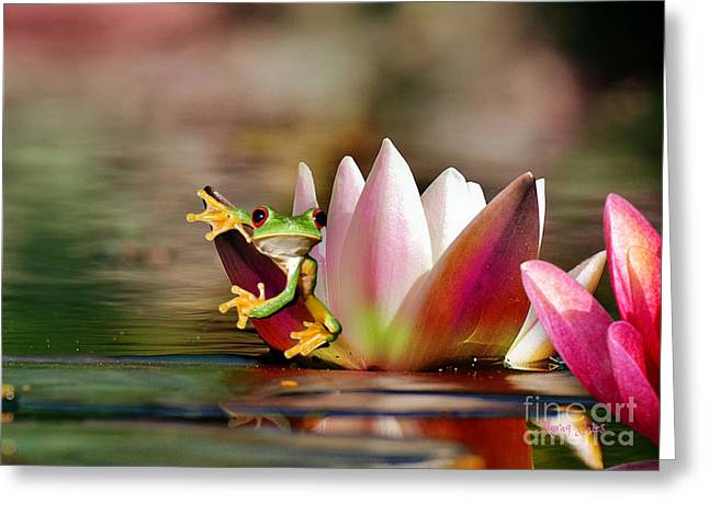 Water Lily And Frog Greeting Card