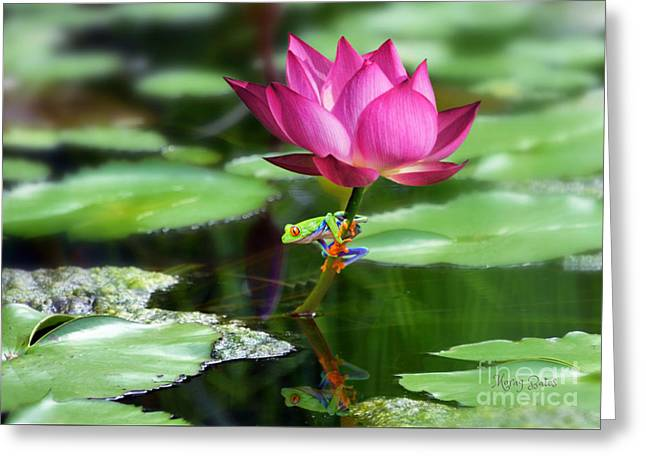 Water Lily And Little Frog Greeting Card