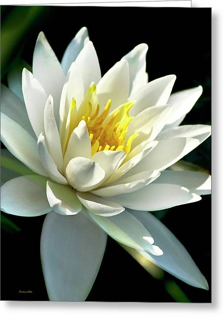 Greeting Card featuring the photograph Water Lily by Christina Rollo