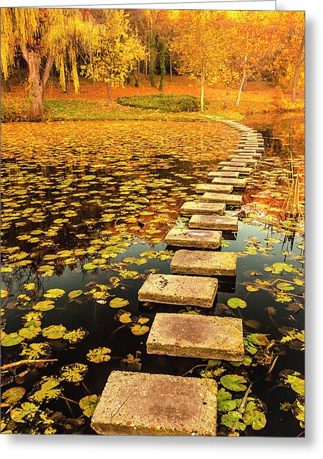 Way In The Lake Greeting Card