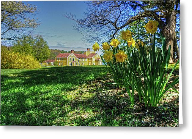 Greeting Card featuring the photograph Wentworth Daffodils by Wayne Marshall Chase
