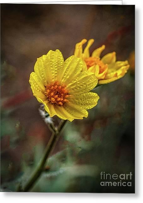 Wet Wild Sunflower Greeting Card
