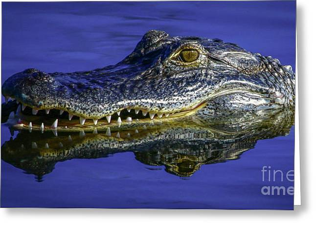 Wetlands Gator Close-up Greeting Card