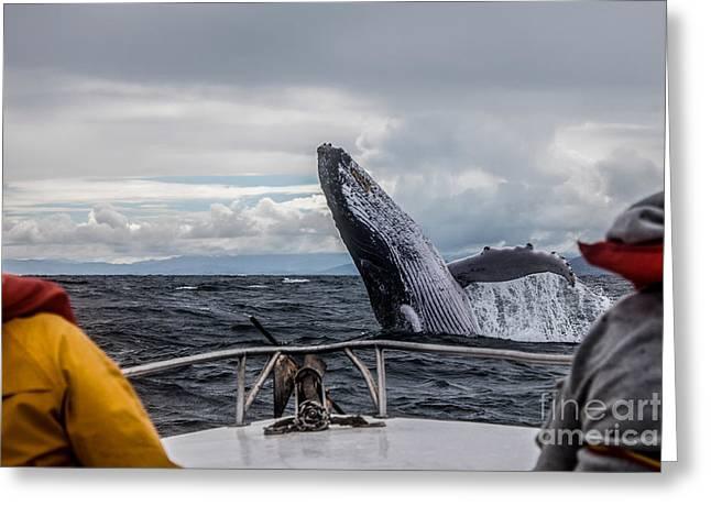 Whale Jump Greeting Card