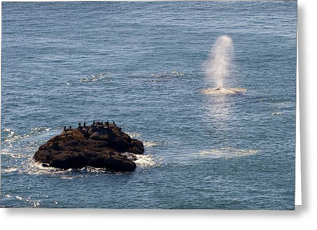 Greeting Card featuring the photograph Whale Watching Yaquina Head Oregonn by Rospotte Photography