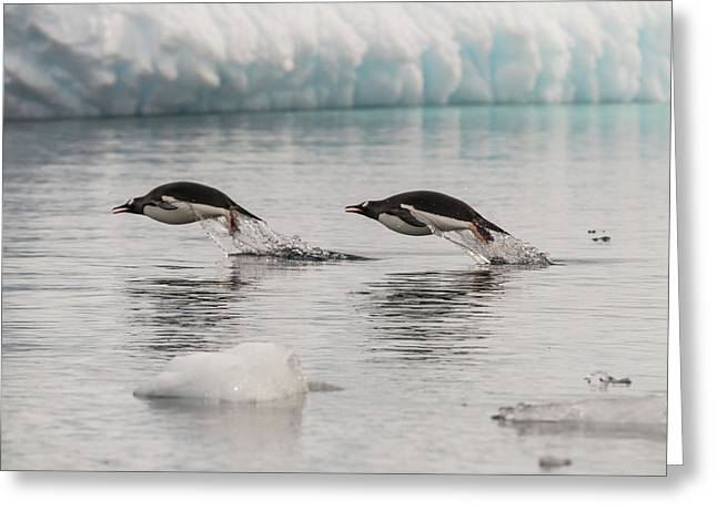 When Penguins Fly Greeting Card