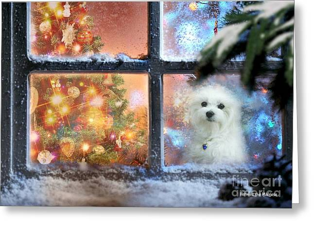 Where Is Santa ? Greeting Card
