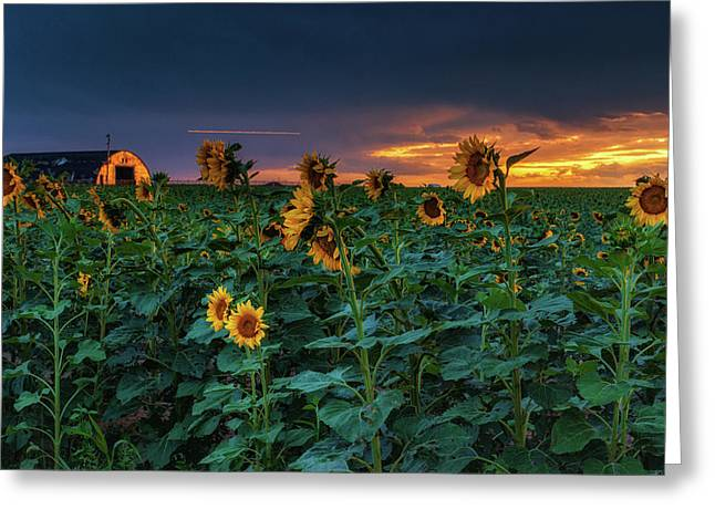 Greeting Card featuring the photograph Whispers Of Summer by John De Bord