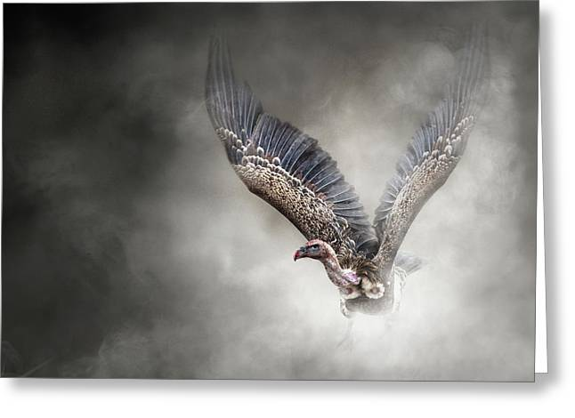 White-backed Vulture - In The Dust Greeting Card