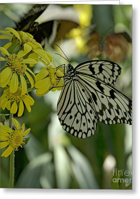 White Butterfly Greeting Card by Elijah Knight