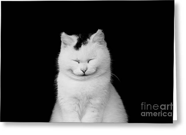 White Cat Smiling Greeting Card