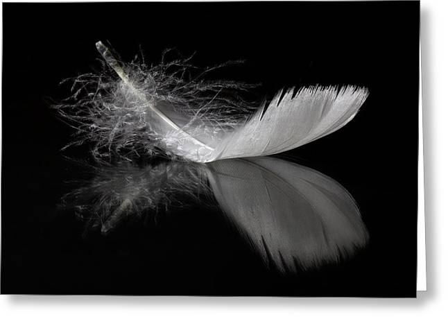 White Feather Reflection Greeting Card