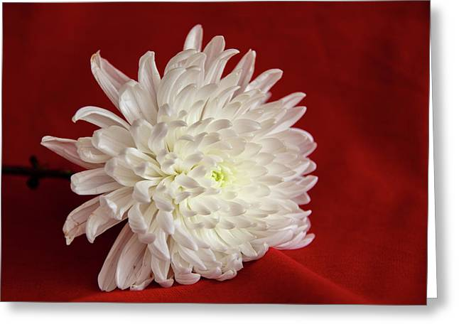 White Flower On Red-1 Greeting Card