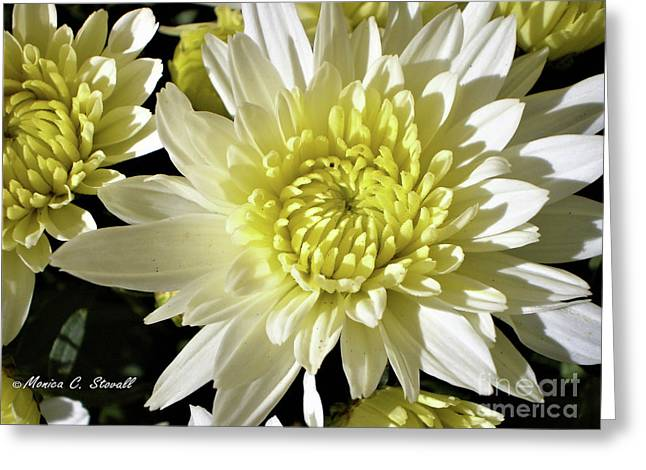 White Flowers W8 Greeting Card