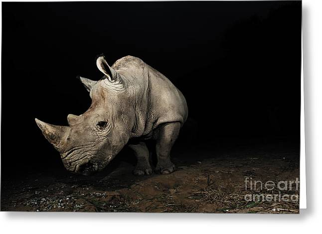 White Rhinoceros Greeting Card by Signature Message