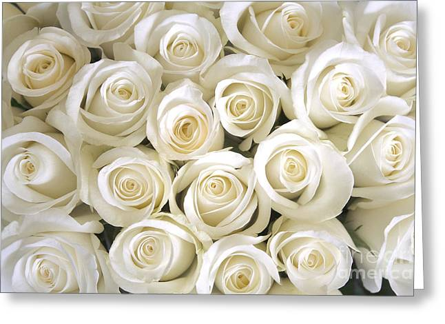 White Roses Background Greeting Card