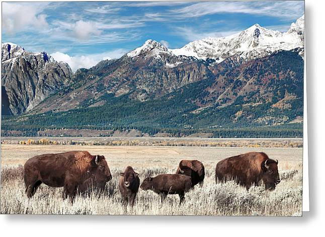 Wild Bison On The Open Range Greeting Card
